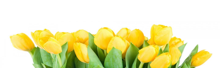 2Bouquet-Yellow-Tulips-Awesome-Hd-Wallpapers
